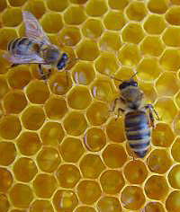 bee products - royal jelly